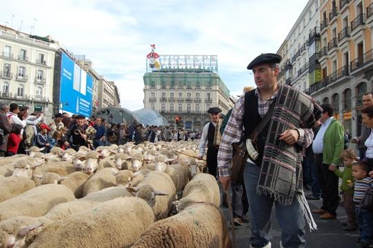 XVI Fiesta de la Trashumancia en Madrid